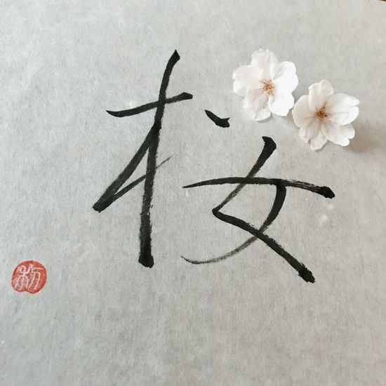 桜 Flower Head Cherry Blossom Cherryblossom Flower サクラ Day Japanese  Japanesecalligraphy Calligraphy
