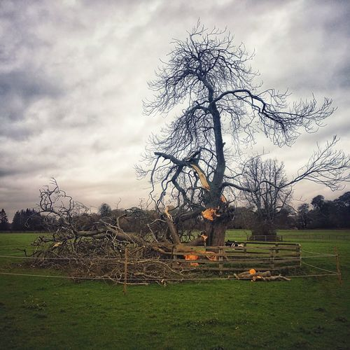 🌪️Ophelia's wrath. Storm Damage Hurricane Damage Broken Tree Tree Day Field No People Nature Outdoors Cloud - Sky Sky Grass Rural Scene Rural Landscape Damaged Tree Broken Bow Wood Nature's Diversities Nature's Power Destruction In Nature EyeEmNewHere Huawei P10 Plus EyeEm Nature Lover Power Of Nature Wind Damage
