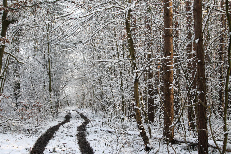 Forest Path Bare Tree Beauty In Nature Branch Cold Temperature Day Forest Forest Photography Forestwalk Nature No People Outdoors Pathway In The Forest Snow Tranquility Tree Trees And Nature White Winter