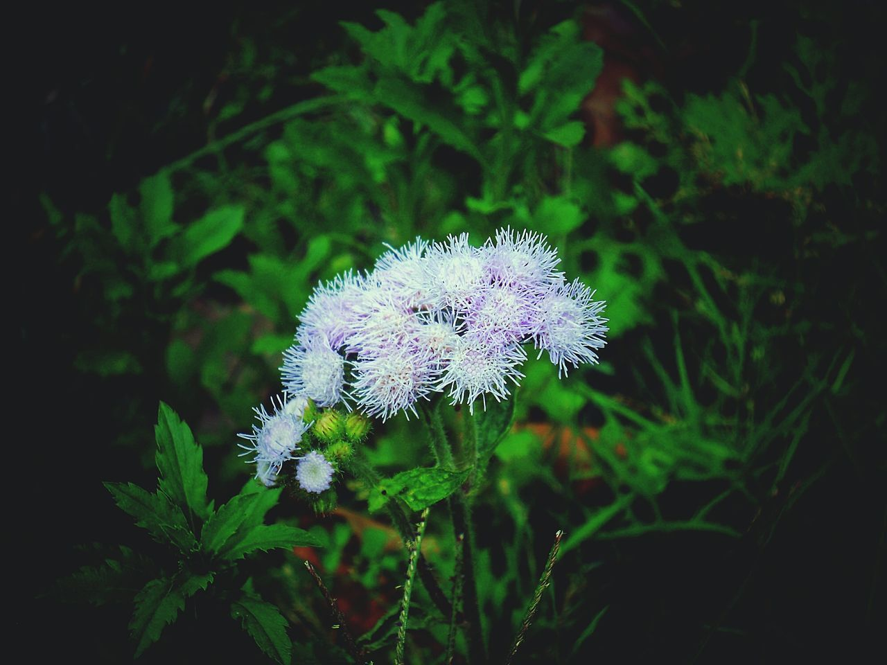 flower, nature, growth, fragility, plant, beauty in nature, flower head, no people, freshness, blooming, outdoors, close-up, day