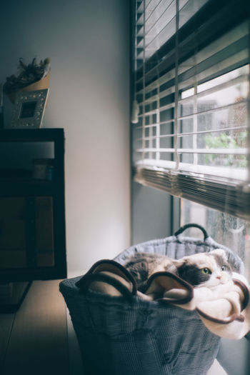 Cat relaxing by window in pet bed at home