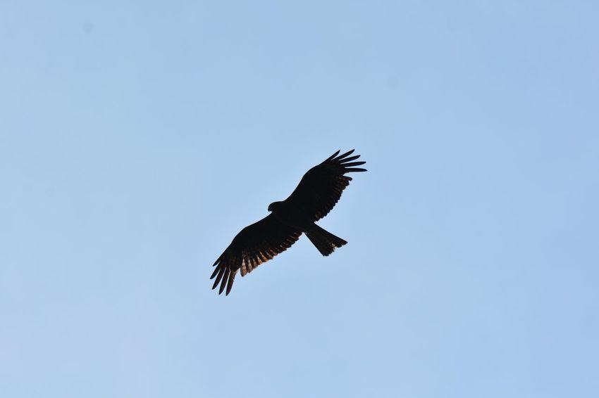 Animals In The Wild Bird Animal Wildlife Flying Vertebrate Animal Themes Animal