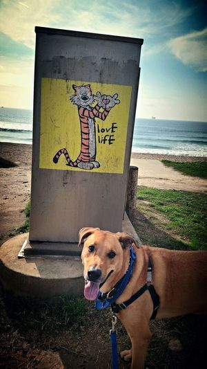 """""""If good thjngs lasted forever, would we appreciate how precious they are?"""" ~Hobbes Truth Hobbes Calvin And Hobbes Love Life Surf City USA Xephyr Cheesebro McIlrath"""