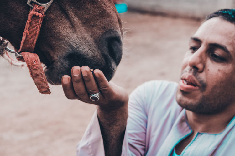 At upper egyot Feeding Horse Feeding Animals The Fashion Photographer - 2018 EyeEm Awards The Portraitist - 2018 EyeEm Awards The Traveler - 2018 EyeEm Awards Beard Close-up Domestic Domestic Animals Facial Hair Focus On Foreground Hand Headshot Herbivorous Lifestyles Livestock Mammal Men One Animal One Person Pets Portrait Real People Vertebrate