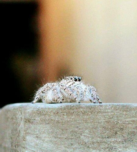 Arachnid Aranha Spider Insect Paparazzi Macro Nature Aracnideos Spider Eyes