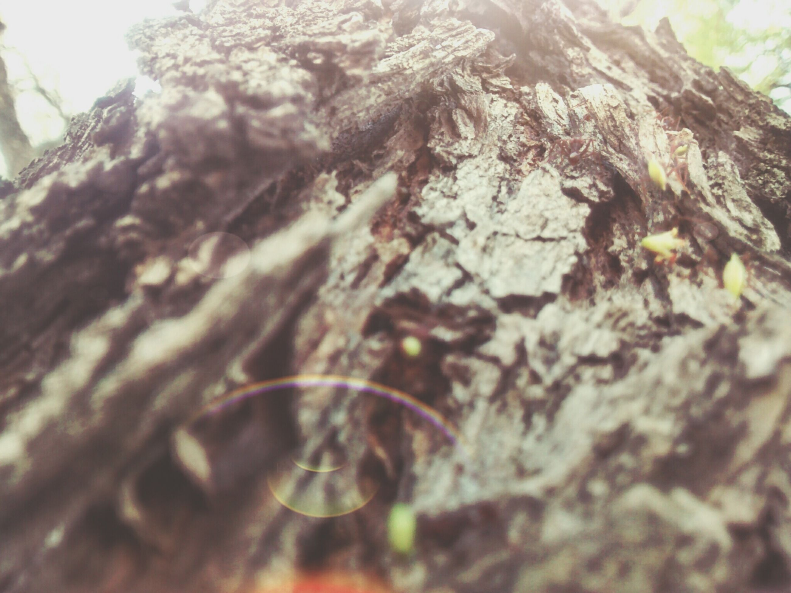 close-up, tree, selective focus, nature, textured, growth, focus on foreground, low angle view, tranquility, rough, day, outdoors, no people, beauty in nature, tree trunk, branch, sunlight, moss, rock - object, natural pattern