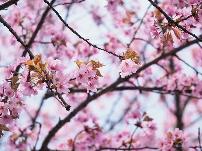 EyeEm Selects Flowering Plant Pink Color Flower Plant Tree Fragility