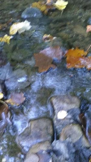 Reflections of nature,. Full Frame Close-up Day Outdoors Nature No People Beauty In Nature Floating On Water Group Of Objects Autumn Foliage River Rock