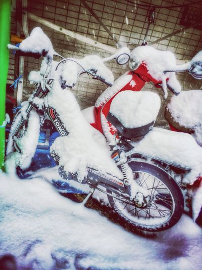 Omg my tomos... Photo Bike Tomos Snow