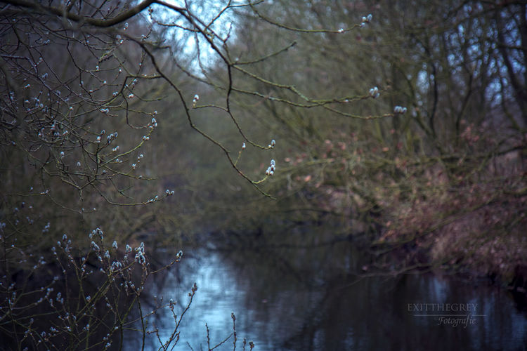Atmospheric Mood Beauty In Nature Branch Day Growth Nature No People Outdoors Sky Spring Signs Tranquility Tree Walking Wall Art Photography Wall Art ♥ Water Waterfront Willow