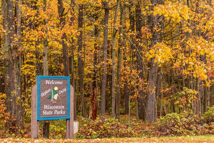 Information sign by trees in forest during autumn