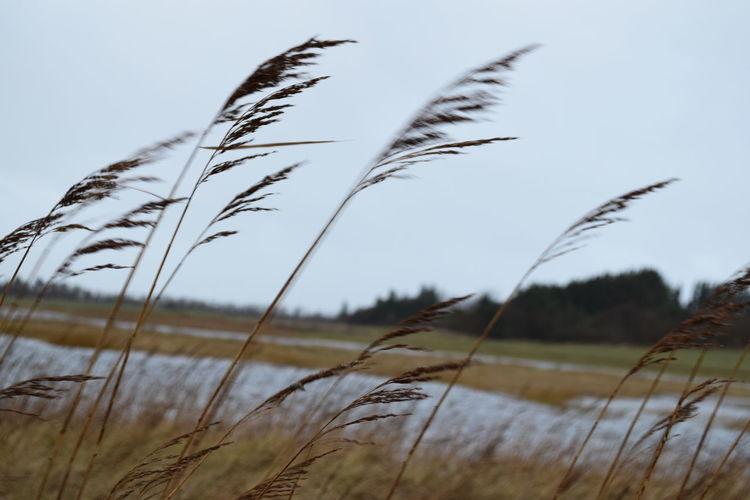 Godelniederung Nordseeinsel Föhr... Nature Outdoors Plant Nikond3300 Föhr December Foehr Godelniederung