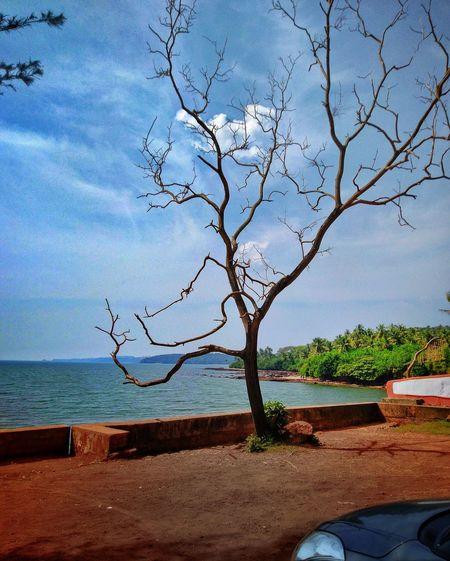 Some serenity away from the Crowd Siridao Goa Goadiaries Goaphotos, Goa Goa India Water Sea Tree Beach Sand Blue Sky Horizon Over Water