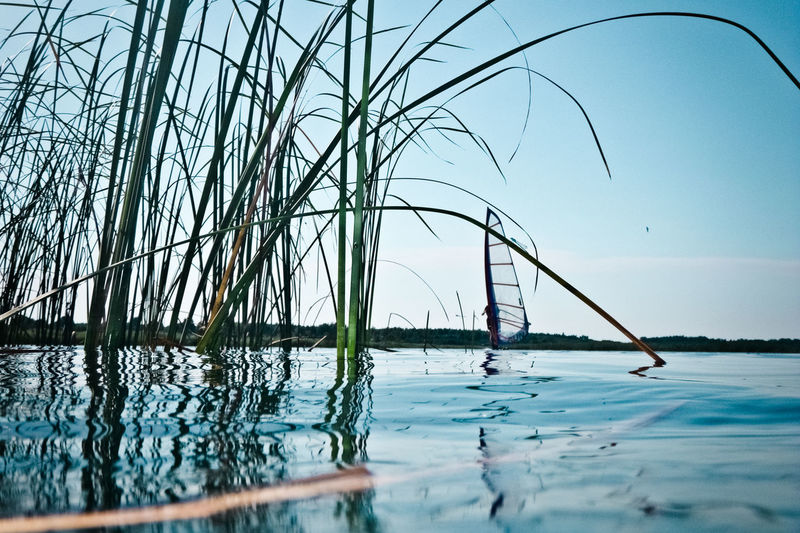 Flooded Nature Water Reflections Blue Day Dramatic Lake Leisure Activity Lifestyles Nature One Person Outdoors Plant Reed Sea Sport Summer Water Water Surface Watersports Wind Windsurf Windsurfer Windsurfing