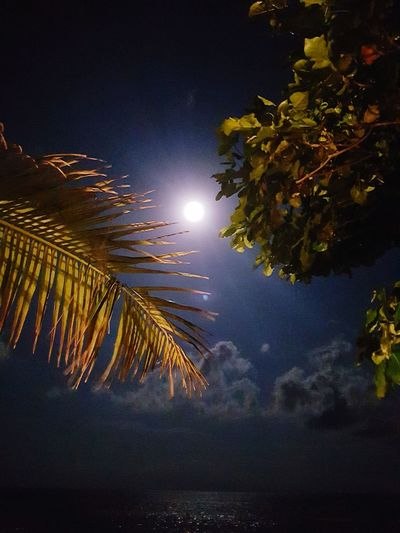 Night Moon Outdoors Nature Scenics Beauty In Nature No People Sky