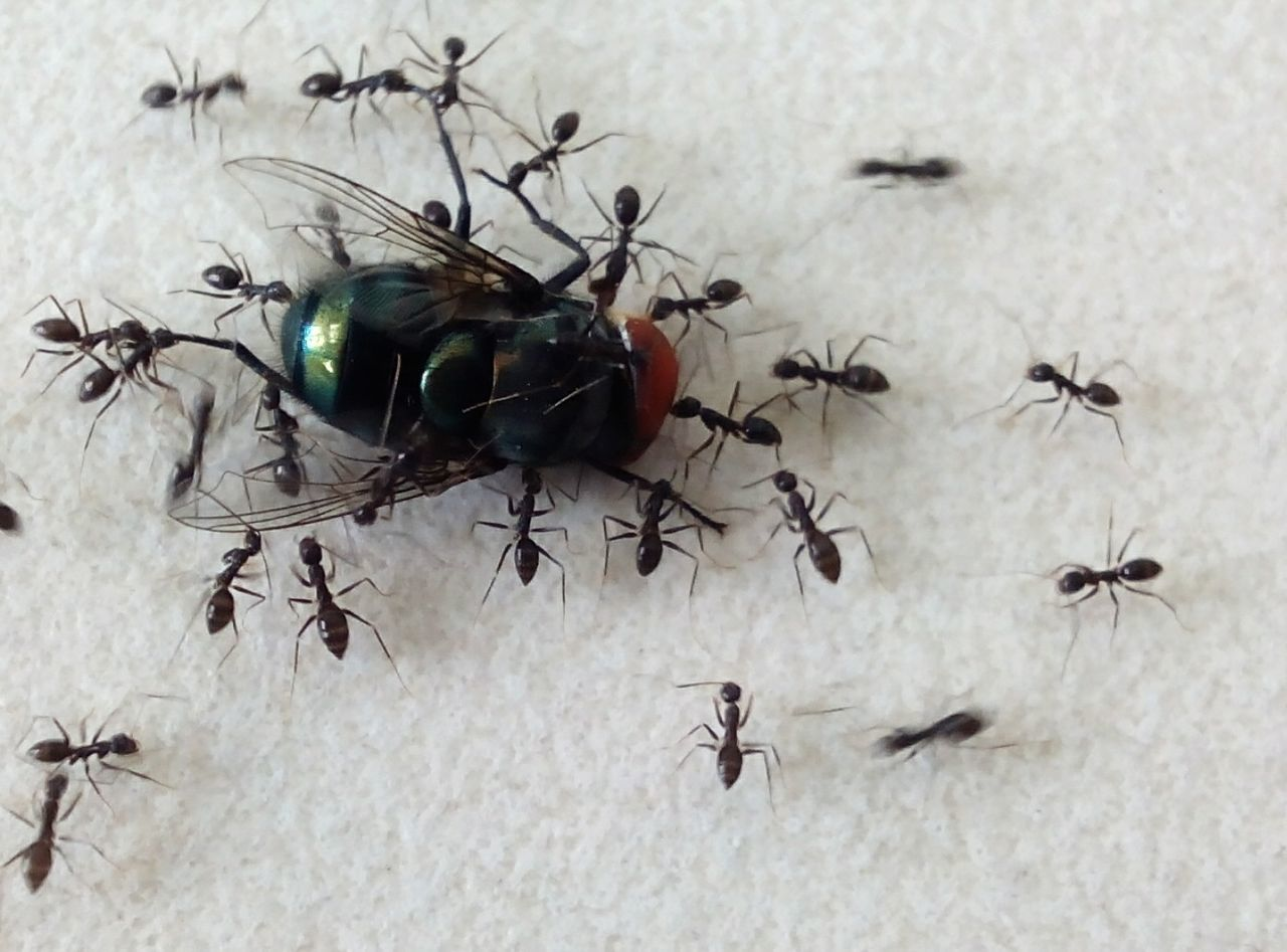 High Angle View Of Ant And Housefly On Field