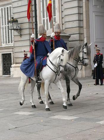 Beautiful Horses Guards