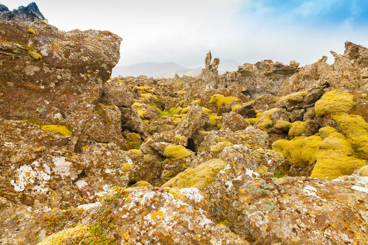 View of yellow flowers growing on rock against sky