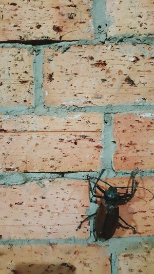 Nature On Your Doorstep Beetle Brick Wall Check This Out Taking Photos My Smartphone Life Kampunglife