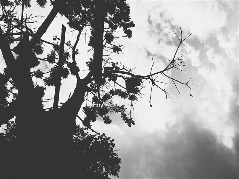 """""""Into silence"""" Street Glitch Tree Sky Low Angle View Silhouette Lights And Shadows Tree Pose Drastic Edit Perspective Monochrome"""