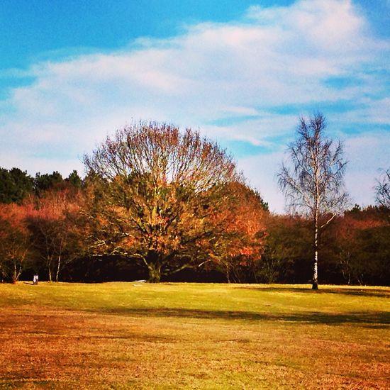 Landscape_Collection