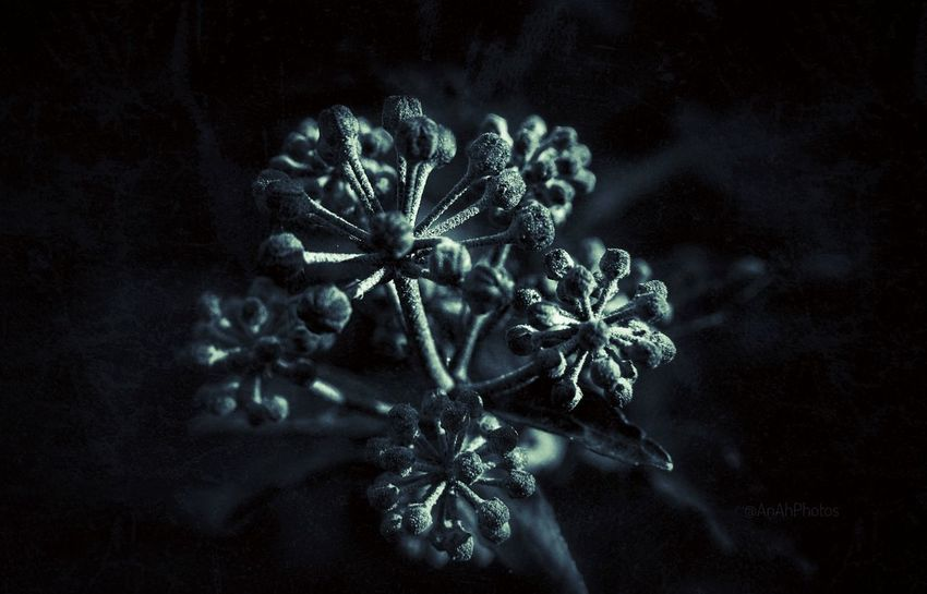 Sepia Edit Sepia Mood Textured  Close-up Editing Photos Plant EyeEm Nature Lover Photography