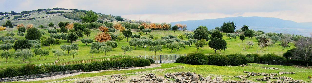 Sardinian nature beyond the stones. EyeEm Nature Lover Barumini Nuraghe Landscape Traveling Taking Photos Green Hugging A Tree Nature Popular Photos