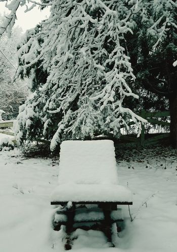 Snow Chair Snow Winter Day Cold Temperature Outdoors No People Nature Tree