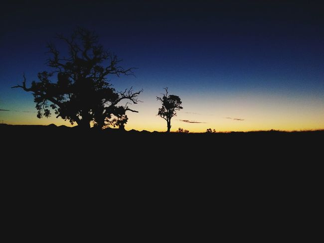 Sunset Silhouette Tree Nature Sky No People Beauty In Nature Outdoors Astronomy Dark Photography Tree Branches Nature