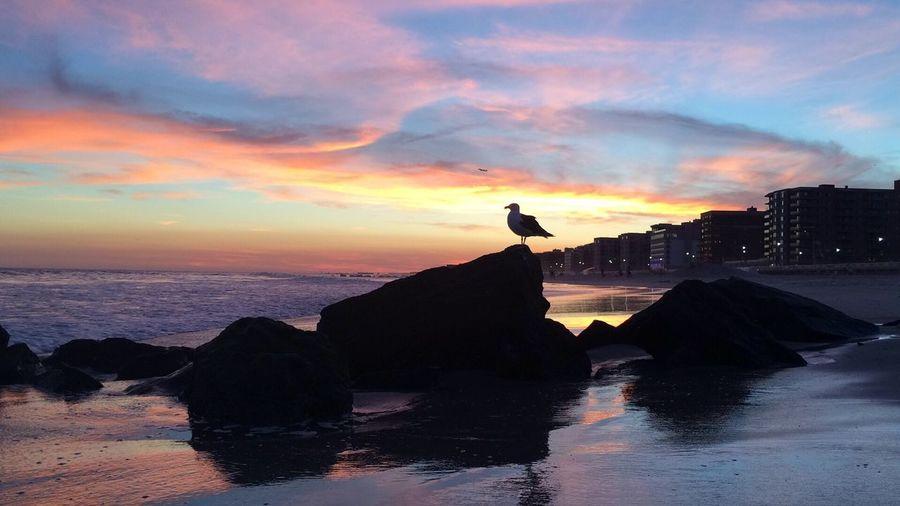 Sunset At Long Beach, NY EyeEm Best Shots Sunset #sun #clouds #skylovers #sky #nature #beautifulinnature #naturalbeauty #photography #landscape Visualmagic