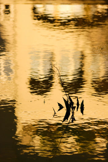 Silhouette ducks swimming in lake