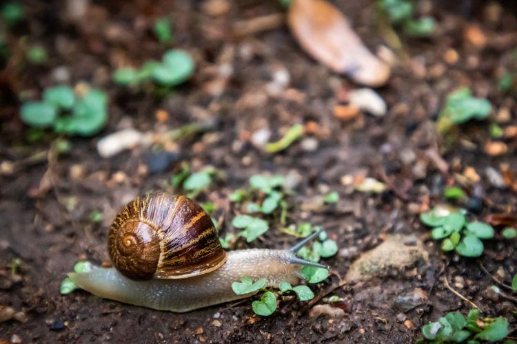 Snail on field
