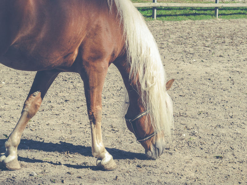 Animal Body Part Animal Leg Animal Themes Day Domestic Animals Equine Equinephotography Horse Horses Low Section Mammal Nature One Animal One Person Outdoors People Pets