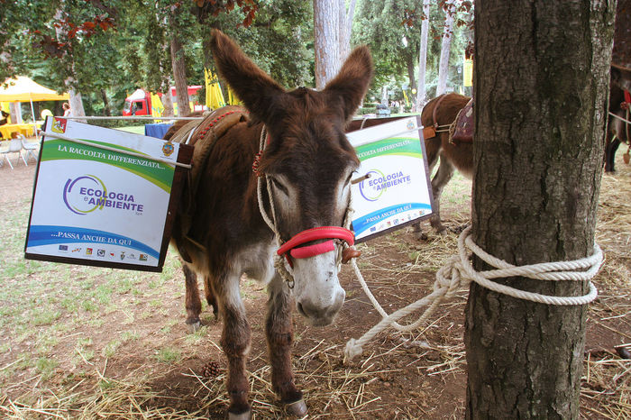 A donkey with packsaddle to a tree Animal Themes Day Domestic Animals Donkey Donkey Animals Donkey Photography Donkey Portrait Low Mammal No People One Animal Outdoors Packsaddle Pets Standing Tree