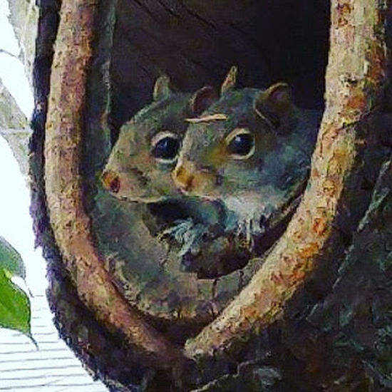 Close-up Tree Trunk Animal Themes Nature Tree Squirrel