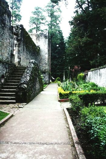 Tree Growth Nature Plant The Way Forward No People Outdoors Footpath Day Green Color Mexican Architecture Architecture Mexico City Mexican Culture Mexican History History Of Mexico Cdmx Desierto De Los Leones. Convento Stairs Stone Material