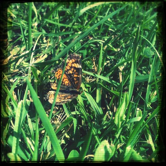 Butterflies are gods proof that we can live a second life Enjoying Life First Eyeem Photo