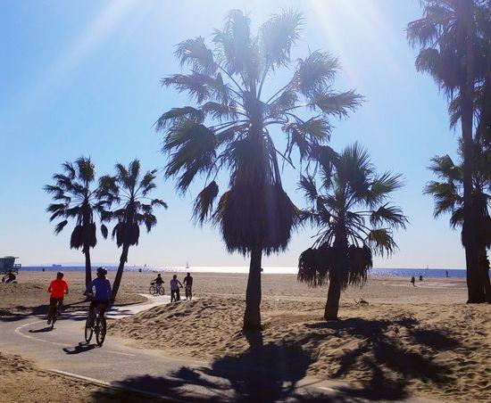 Santa Monica Santa Monica Los Angeles, California Sunshine California Beach Bicycles Family Tourists Travel Weekend Activities