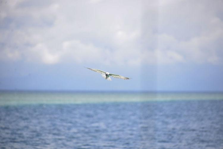 Bird flying over sea against cloudy sky