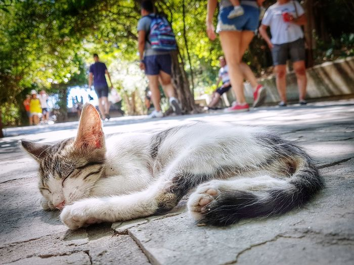 sleeping cat Laying Down Cat Cats Cat♡ Cat Lovers Cats Of EyeEm Sleeping Cat Sleeping Sleepy Outdoors Calmness Quiet Quietness Quiet Moments Feline