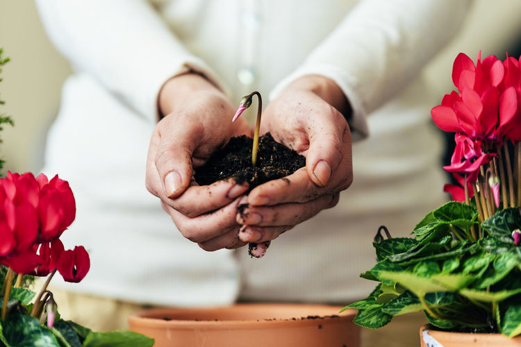 One Person Plant Flower Flowering Plant Human Hand Hand Freshness Holding Beauty In Nature Midsection Leaf Nature Plant Part Real People Focus On Foreground Indoors  Close-up Human Body Part Food And Drink Vulnerability  Preparation  Flower Head Care Home Interior Copy Space Flowerpot People Young Adult Lifestyle Seeds Bio Eco Earth