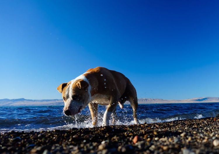 Dog Love Dogs Of EyeEm Doglover Dogslife Dog Portrait Dogs Life Dog❤ Dogstagram Dogphoto Dogs_of_instagram Astronomy Photography Dogs Animal Beach Sea Water Dog Mammal Sand Nature Wave Splashing Droplet Outdoors