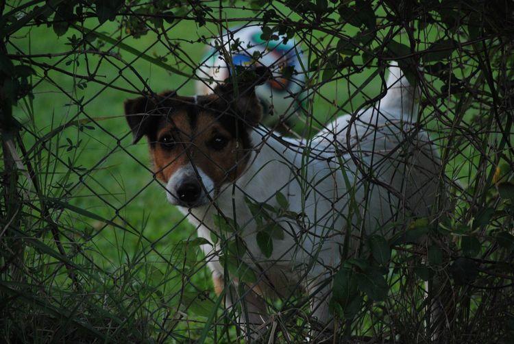 Hidden Moments Dog Peacefull Looks