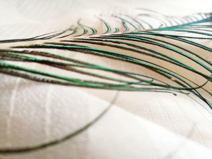 plume de paon 2 Peacock Peacok Feather Plumes De Paon