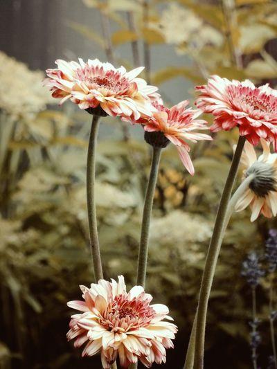 Garden In De Buurt Nature Eye Em Nature Lover Macro_collection Nature_collection EyeEm Best Shots EyeEm Nature Lover Flowers :) EyeEm Nature Lover 🌷 Flowers 🌹 EyeEm Best Shots - Flowers Beauty In Nature
