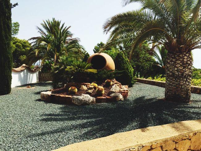 Spain ☀️ Sunny Day Love Spain Villa Garden Palmtree BIG Vase