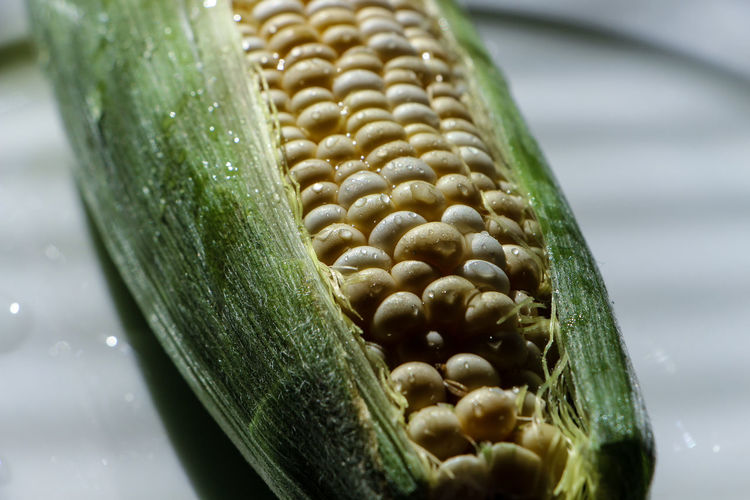 Close-Up Of Fresh Corn With Water Drops In Plate