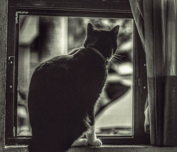 Rear view of cat looking through window at home