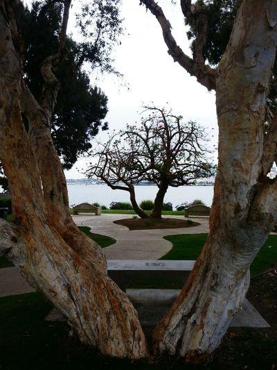 Bayview Park, Coronado, San Diego, California