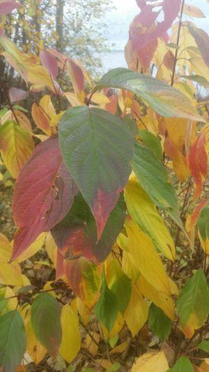 Die letzten Farben des Herbstes Steinhude-am-meer.de - Dein Meer-Foto